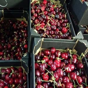 Spanish Cherries