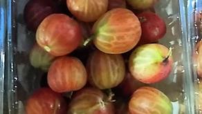 English Red Gooseberries, Spanish Yellow Plums & English Cherries