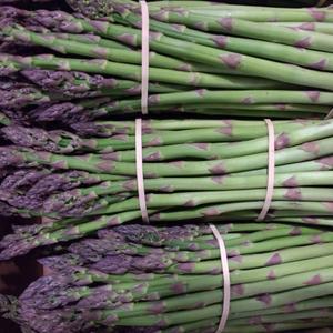 Sprue Asparagus