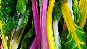Rainbow Chard, Gooseberries & Round Lettuce