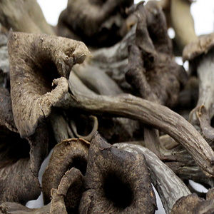 Trompette Mushrooms