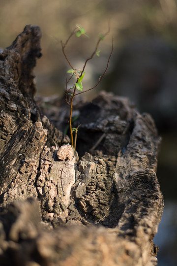 Austin-Nature-ATX Portraits-Personal Work.jpg