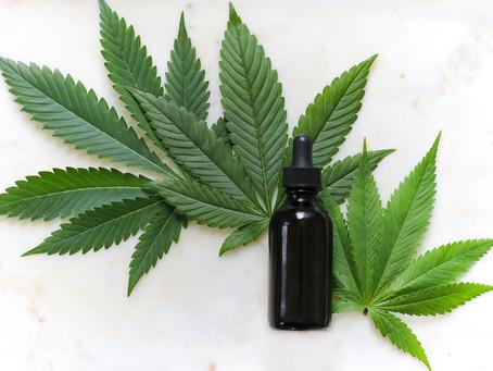 Legalização da maconha para uso medicinal e seus princípios ativos