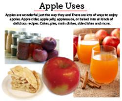 13 Apple uses