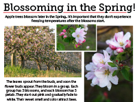 5 Blossoming in Spring