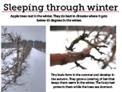 2 Sleeping through Winter