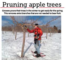 4 pruning