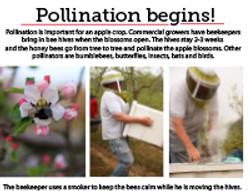 7  Pollination