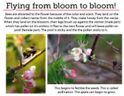 8 Pollination