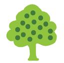 CT Apples green apple