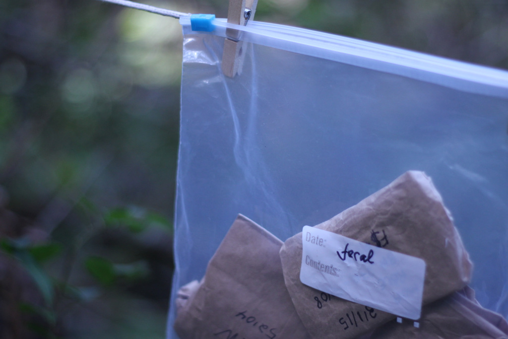 Fecal samples stored in a ziploc bag
