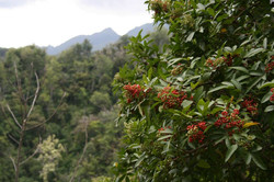 View of vegetation and mountains