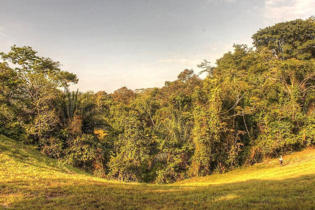 Forest fragment edge