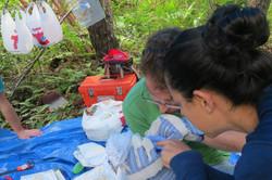 Workers processing captured birds
