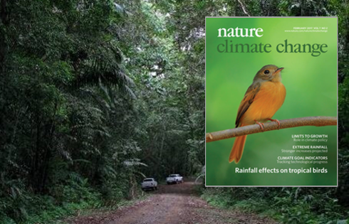 Cover of Nature Climate Change issue with article on rainfall effectson tropical birds.