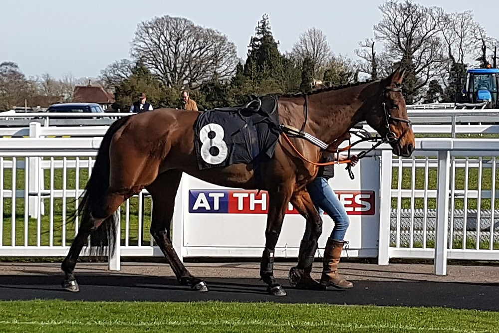BT before her race at Plumpton.