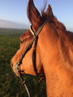 Mr F gallops