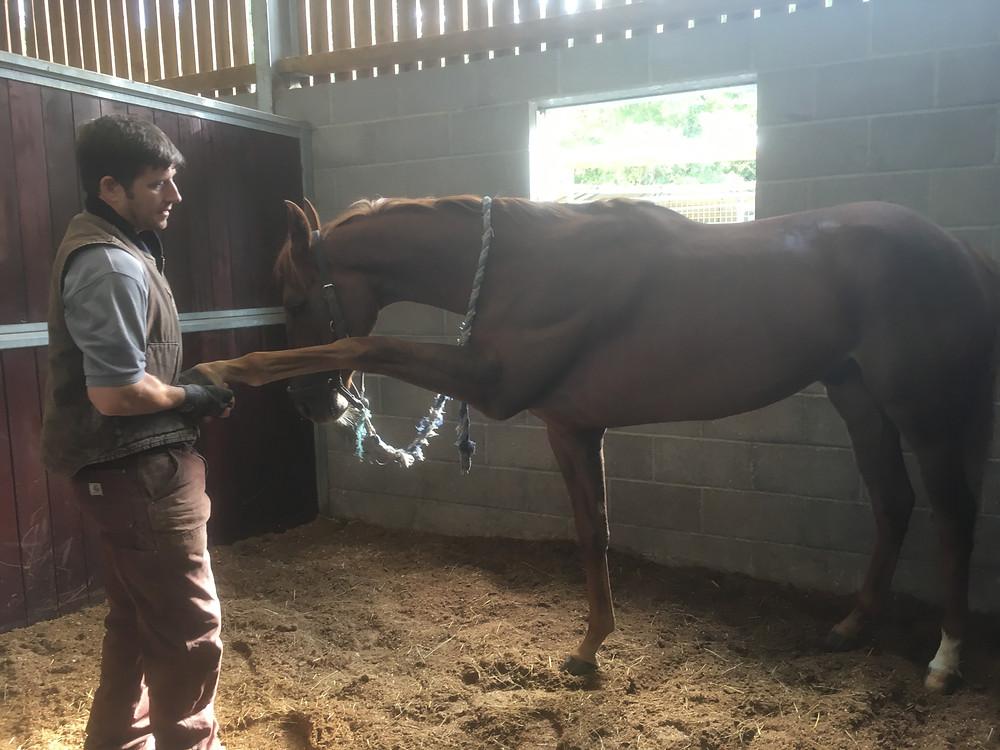 Marmite having a stretch with Anton