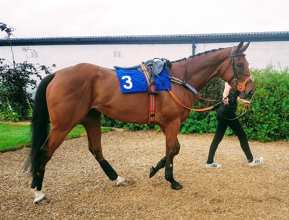 Starfoot before his second win