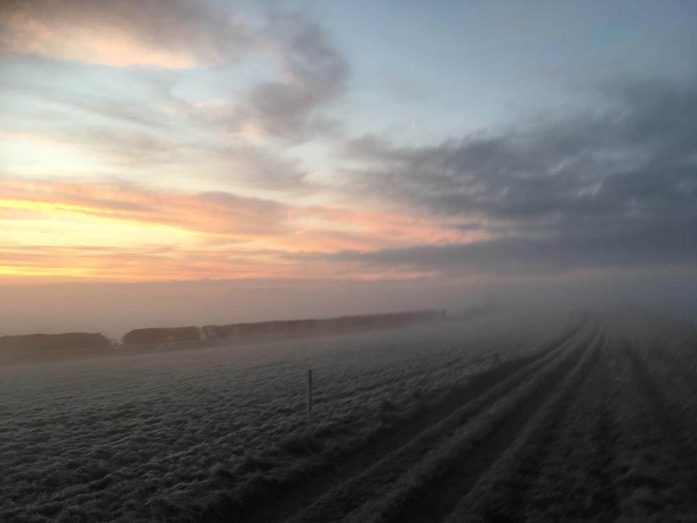 Cold gallops!
