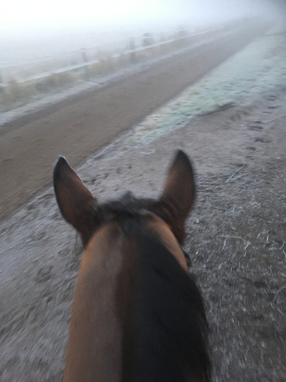 Starfoot on his way home from the gallops in freezing fog and -5...Nice.
