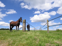 horses chilling in the field
