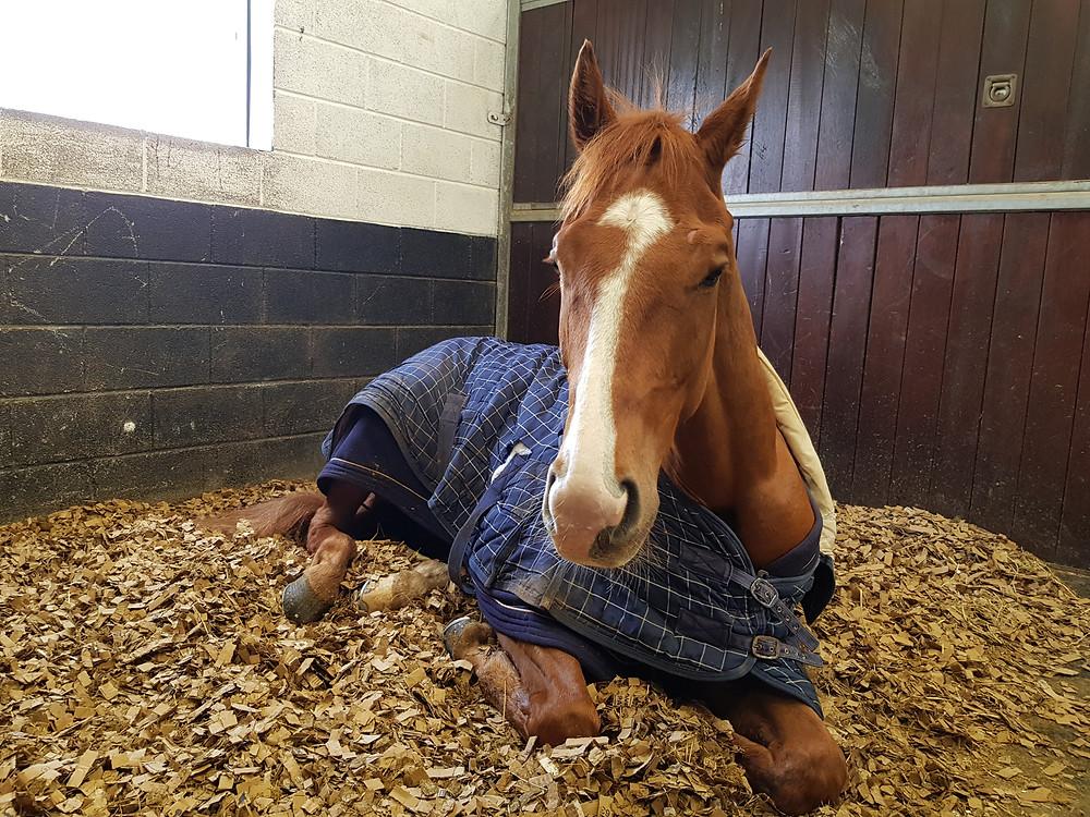 Jack having a well deserved rest