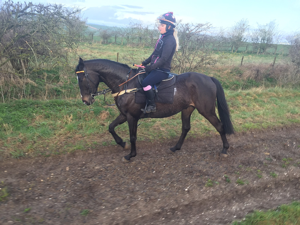 Bill after cantering yesterday with Sinead