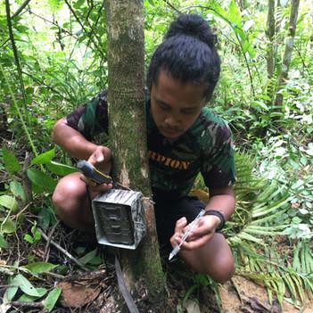 Setting a camera trap