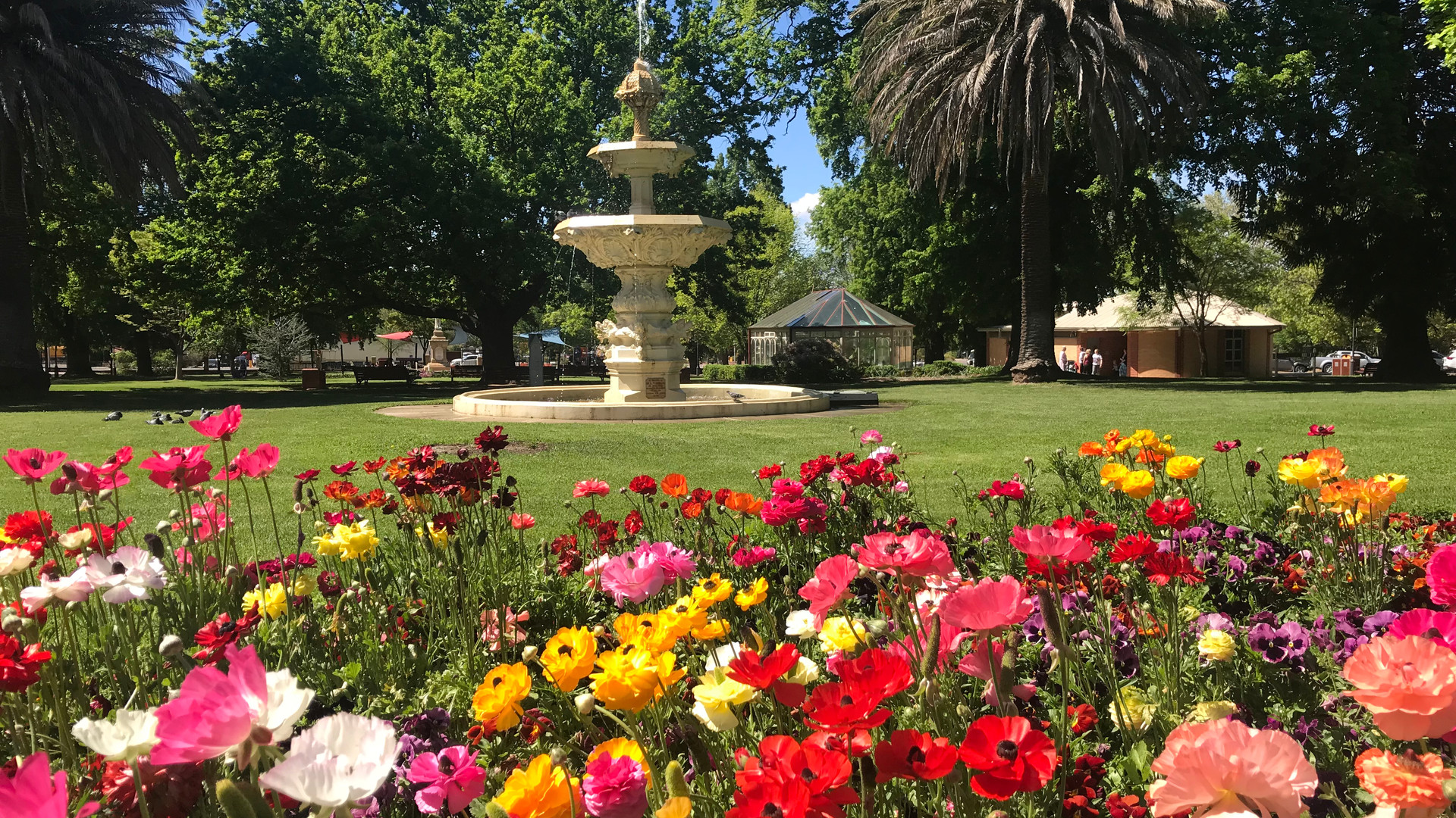 Spring into Life in Goulburn by Karin Calford.jpg
