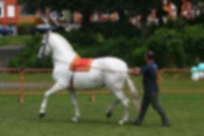 horses3.jpg
