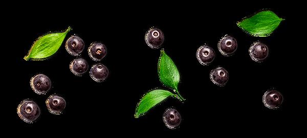 Acai-fruta-e-folhas.png