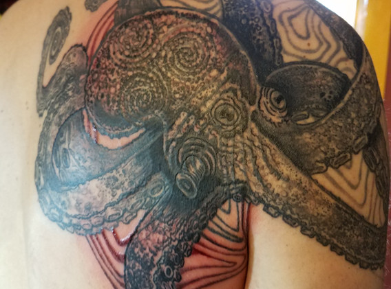 octopus coverup