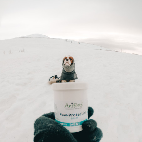 Paw protection with natural balm