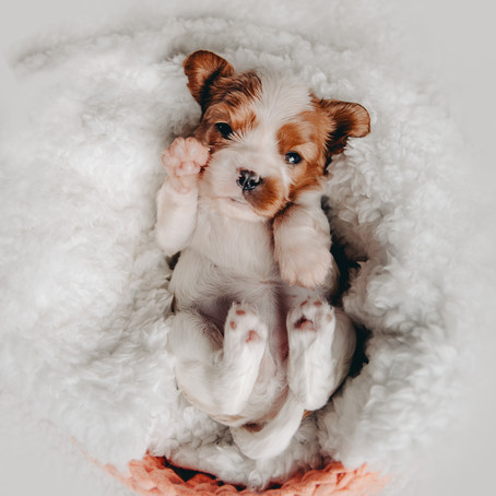How to photograph puppies (1 day to 1 month) - Part 1