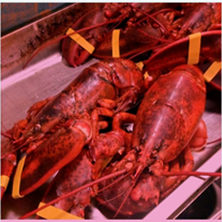 lobster website original.jpg