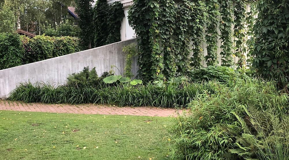 Humleplanter i kjetting