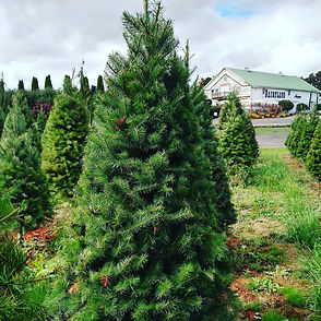 tree field barn.jpg