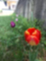 orto giardino 4.JPG