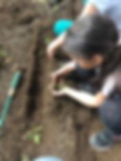 orto giardino 3.JPG