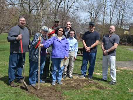 AMERICAN ELM PLANTED TODAY IN HONOR OF SCOUTING AND LONGTIME OLEAN SCOUTMASTER