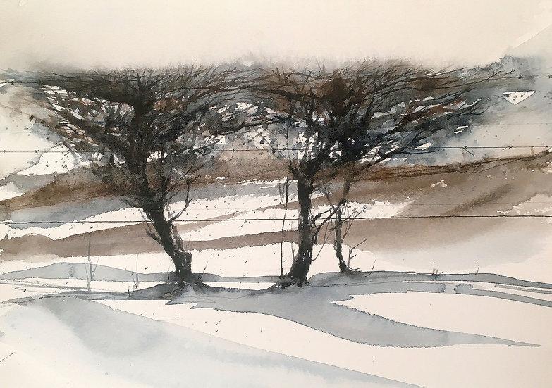 Winter Hedging II