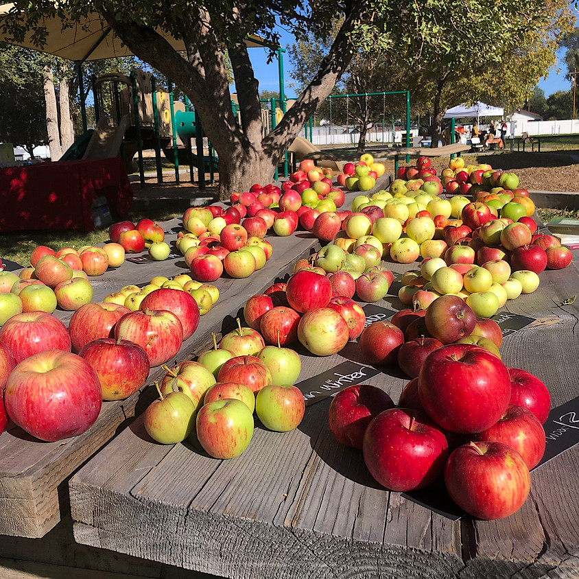 Heirloom Apple Tree Sale