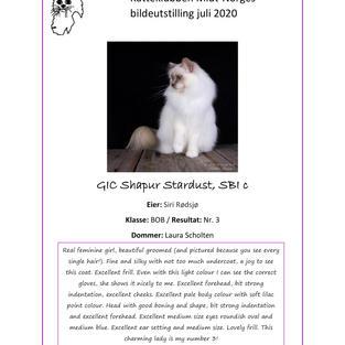 GIC Shapur Stardust Nr. 3 BOB