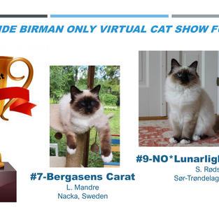 BOB Lockdown Kittens Nr. 4