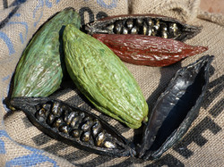 """Cabosses de cacao"" | C.F"