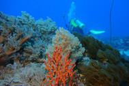 underwater-713820_640.jpg