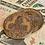 Bronze coins