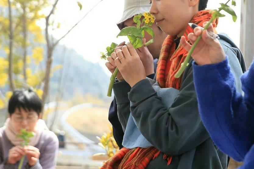 白菜の菜の花を五感で観察する