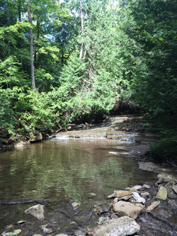 neighbouring forests & streams